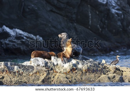 A group of sea lions sunbathing in the morning sun on the shoreline - stock photo