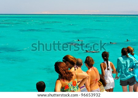 A group of tourist, on a one-day marine excursion, gather on the boat deck to curiously watch a pod of dolphins as they swim in the blue turquoise waters of the Red Sea, Egypt