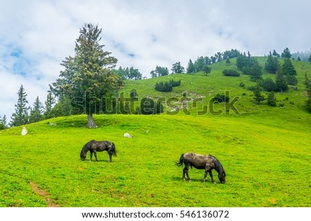 a group of wild horses are grazing grass in liechtenstein.