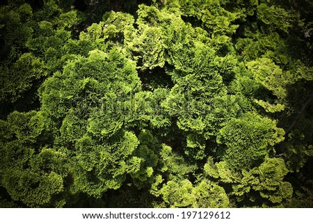 A grouping of trees and greenery in the woods. - stock photo