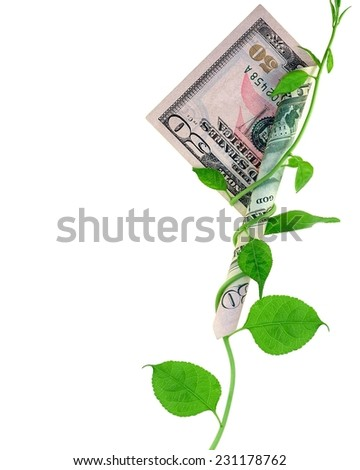 A growing vine wrapped around a fifty- dollar bill. - stock photo