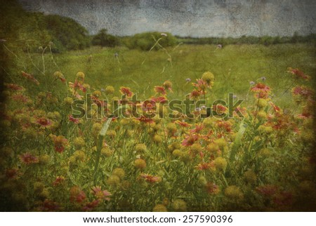 A grunge texture display of Indian Blankets along side a road. These wildflowers are also known as a guillardia pulchella and are a member of the sunflower family. - stock photo