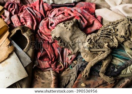 A half decayed kitten with rotting skin and its skeleton exposed lies among abandoned clothes in a derelict house. - stock photo