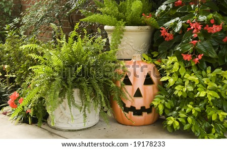 A Halloween Pumpkin surrounded by lush green plants.