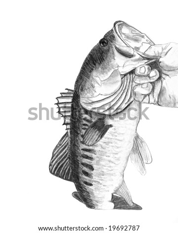A hand drawn pencil sketch of a hand holding a large mouth bass - original artwork by me. - stock photo