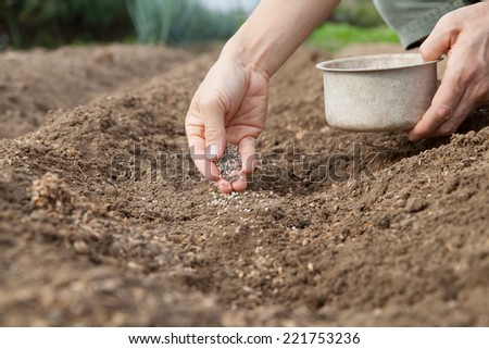 a hand giving fertilizer  - stock photo