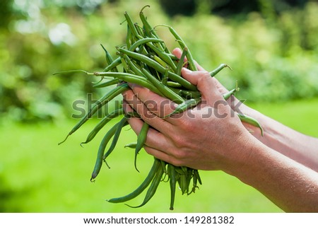A hand holding fresh green French bean