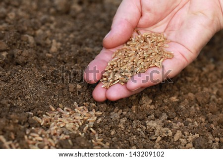 A hand is sowing seeds in the dirt in a garden - stock photo