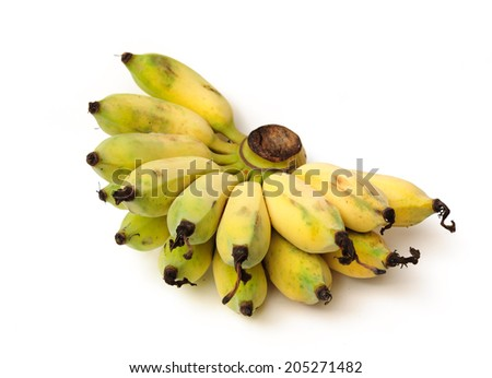 a hand of almost ripe Cultivated bananas - stock photo