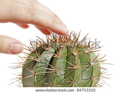 a hand touching a dangerous spiky prickly cactus isolated on white - stock photo