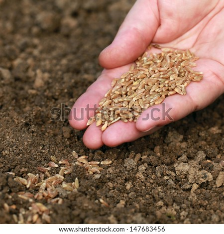 A hand with seeds falling in the soil in a garden - stock photo