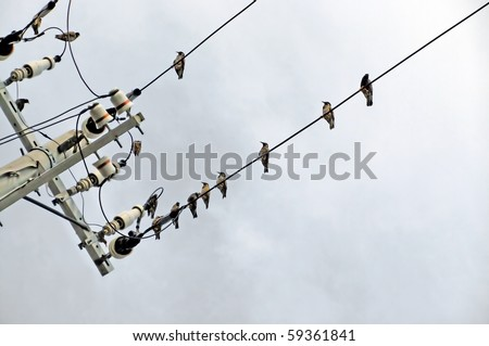 A handful of birds perched on a power line
