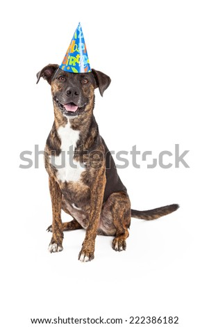 A happy and friendly dog wearing a Happy Birthday hat while sitting and looking forward with a smile and open mouth - stock photo