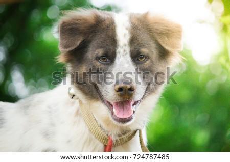 A Happy Dog In Graden