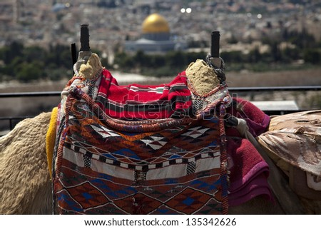 A harnessed camel hump in Jerusalem, resting at the Mount of Olives viewpoint on the old city of Jerusalem. In the background, defocused, is the world famous Dome of the Rock. - stock photo