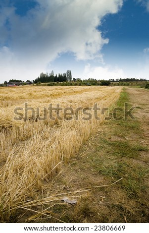A hay field at a farm in the Pacific Northwest. - stock photo