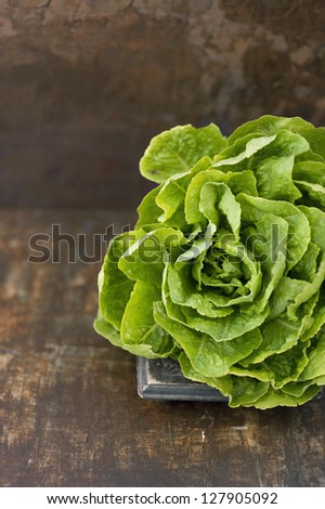 A head of fresh organic lettuce placed in a beautiful brown painted background. - stock photo