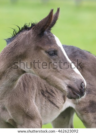 A head shot of a pretty foal.