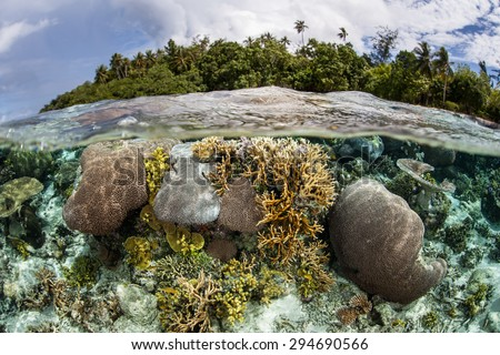 A healthy coral reef grows in shallow water in the Solomon Islands. This Melanesian archipelago is one of the most biodiverse areas on Earth for marine organisms.  - stock photo