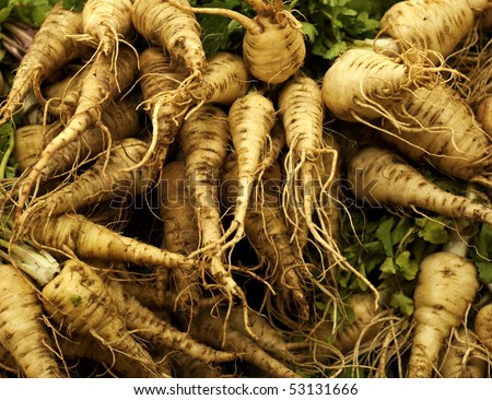 A heap of fresh parsnip Photo taken on: May 15th, 2010 - stock photo