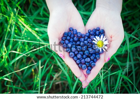 A heart shape blueberries in female hands at the summer  - stock photo