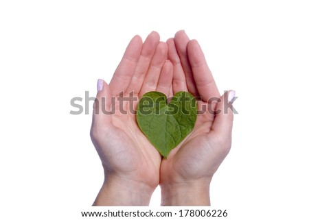 A heart shaped leaf resting in a girls hands. - stock photo