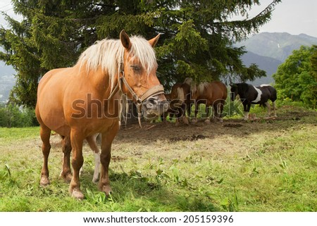 a herd of horses grazing in the mountains
