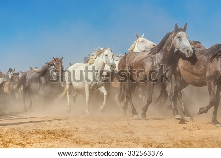 A herd of horses in the dust and haze runs out of the corral. - stock photo