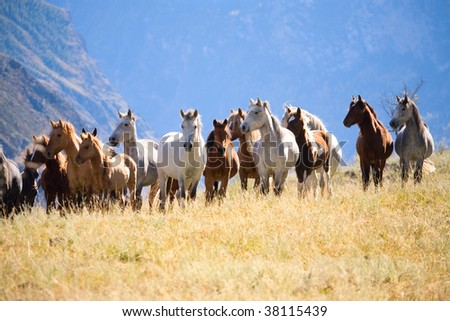 A herd of horses in the mountains - stock photo