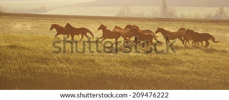 A herd of horses. The rising sun. Horses walk in freedom. Mustangs. - stock photo
