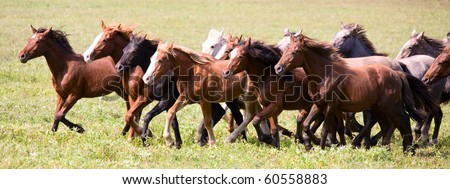 A herd of young horses running very quickly - stock photo