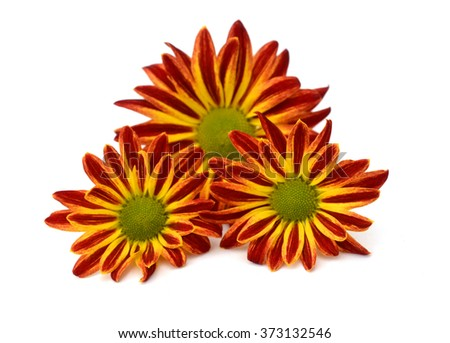A high detail close-up shot of bright orange calendula officinalis (pot marigold) flower isolated on a white background - stock photo