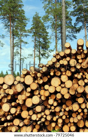 A high pile of cut wooden logs with pine trees on the background. - stock photo