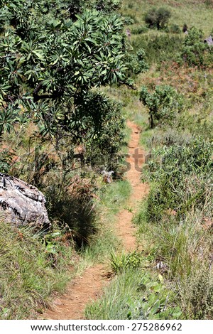A hiking path through the bush of the Drakensberg National Park in South Africa. - stock photo