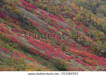 A hill with plants that are changing color. - stock photo