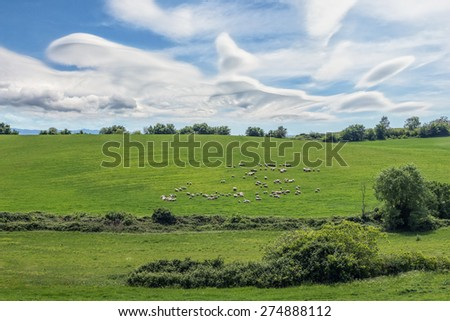 A hill with sheep grazing and a sky full of clouds - stock photo