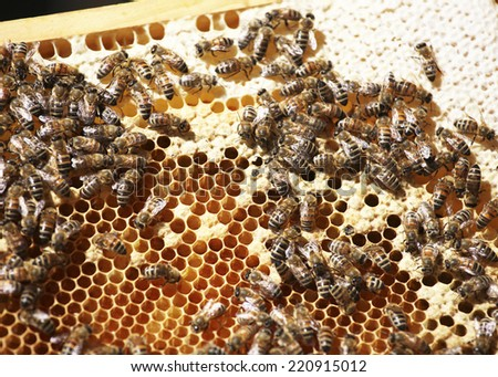 a hive moves on a honeycomb - stock photo