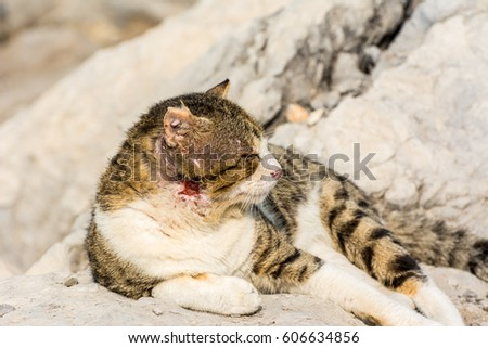 A homeless wounded cat laying on stone