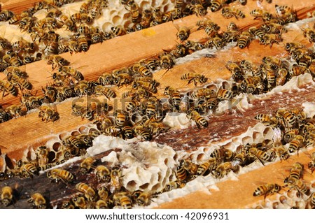 a honey comb with many working bees