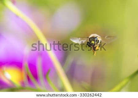 A honeybee flying toward here. - stock photo