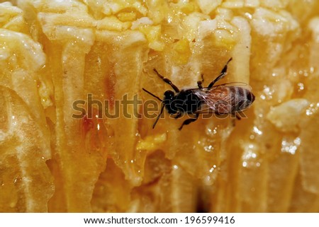 A honeycomb with a bee - stock photo