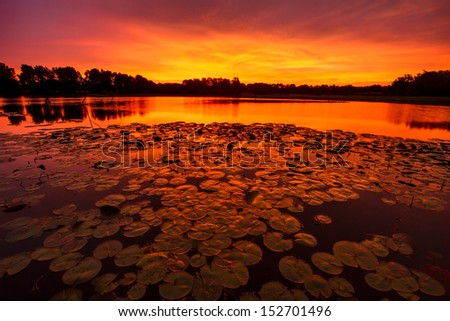 A horizontal image of lilypads at Sunrise on a pond just outside of Kansas City, Missouri.   - stock photo