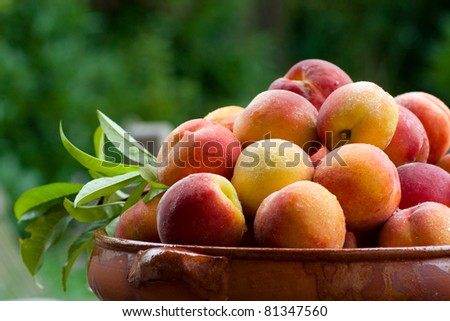 A horizontal view of very juicy peaches in a bowl - stock photo