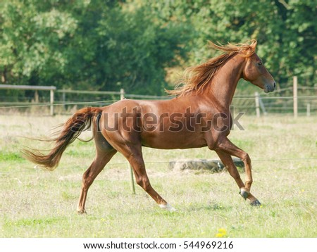 A horse canters loose through a paddock.