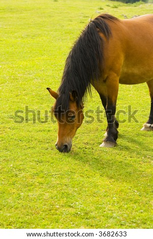 A horse eating grass. - stock photo