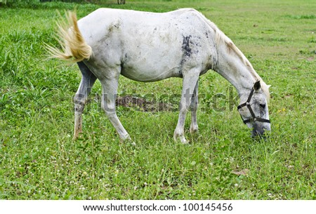 a horse eats the grass - stock photo