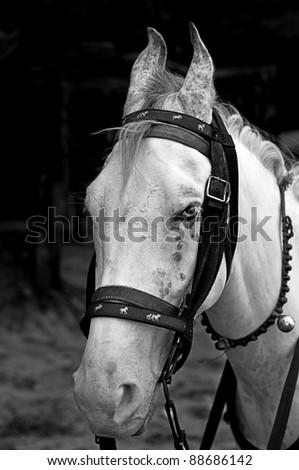 A horse face - stock photo