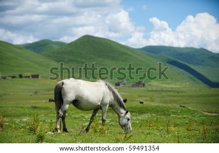 A horse pasture in the grassland. - stock photo