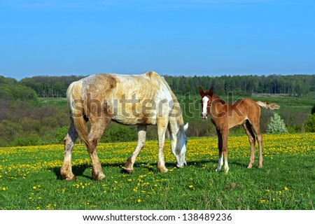 A horse with a foal in the pasture