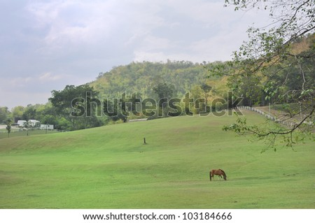 A horse with green field. - stock photo